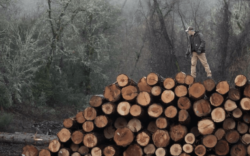 man wearing carhartt workwear standing on pile of logs