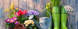 Image of flowers, gardening tools, gloves, against faded blue wood background