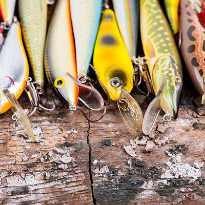 Closeup of multiple colorful fish lined up on the dock.