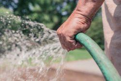 watering lawn Bozeman Montana