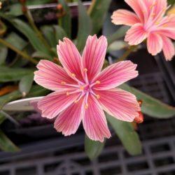 Flowers for sale Bozeman Montana