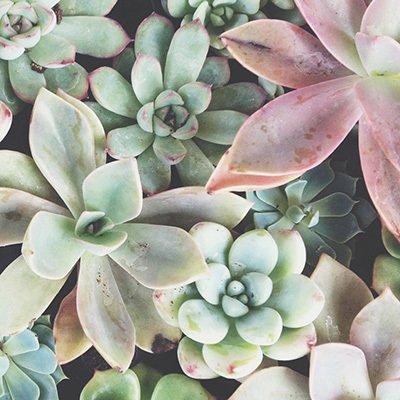 Garden Center thumbnail