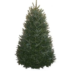 Christmas tree permits - November & December only