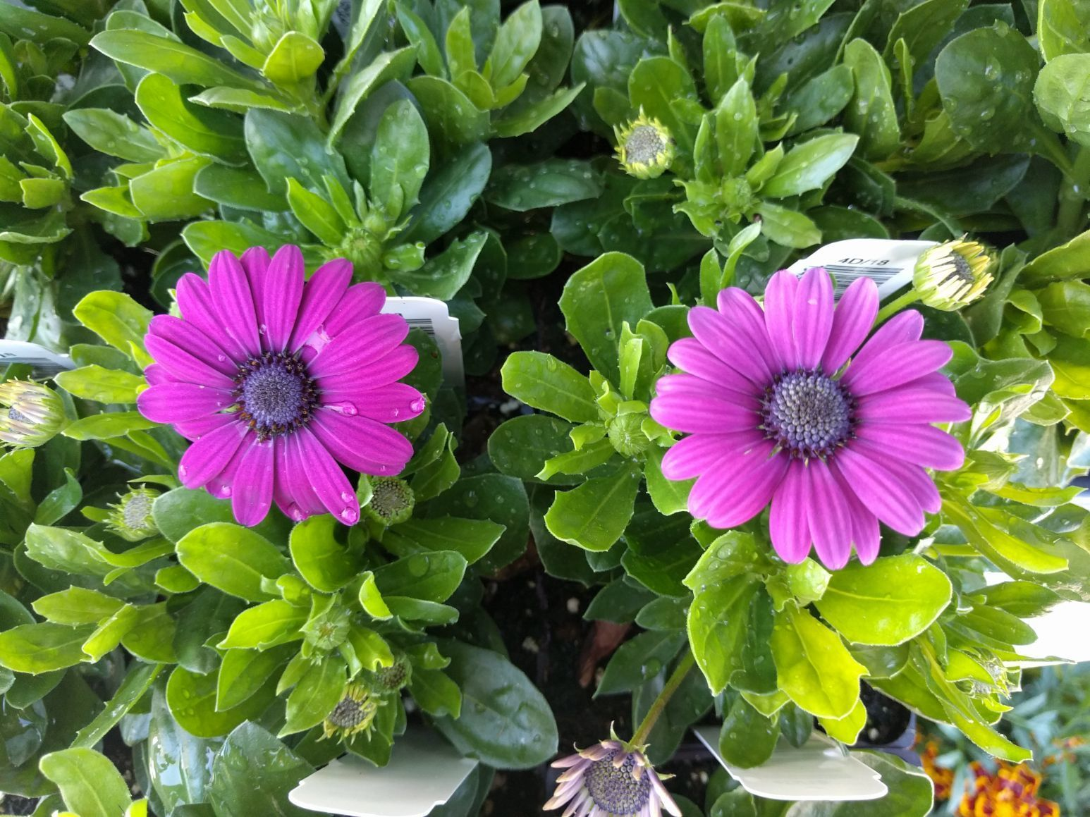 Flowers Bozeman Montana