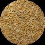 Medium Chips Seeds Bozeman Montana