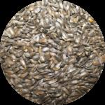 Sunflower seeds Bozeman Montana