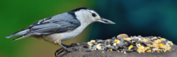 bird Bozeman Montana