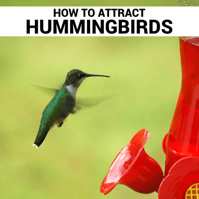 How To Attract Hummingbirds thumbnail