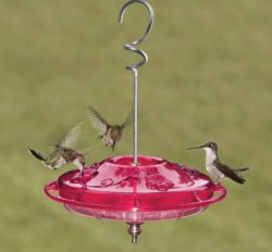 hummingbird saucer feeder Bozeman Montana