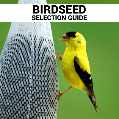 birdseed selection guide Bozeman Montana