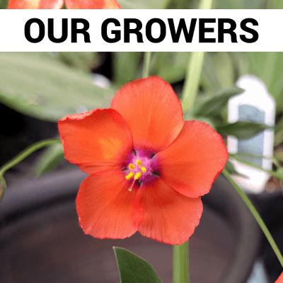 Our Growers Bozeman Montana