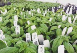 plants for sale Bozeman Montana