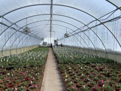 Visser Greenhouses products sold at owenhouse ace hardware of bozeman montana