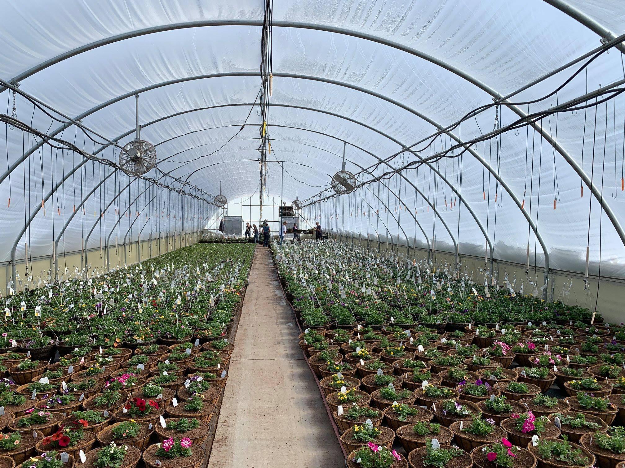 Visser Greenhouse Interior bozeman montana ACE Hardware