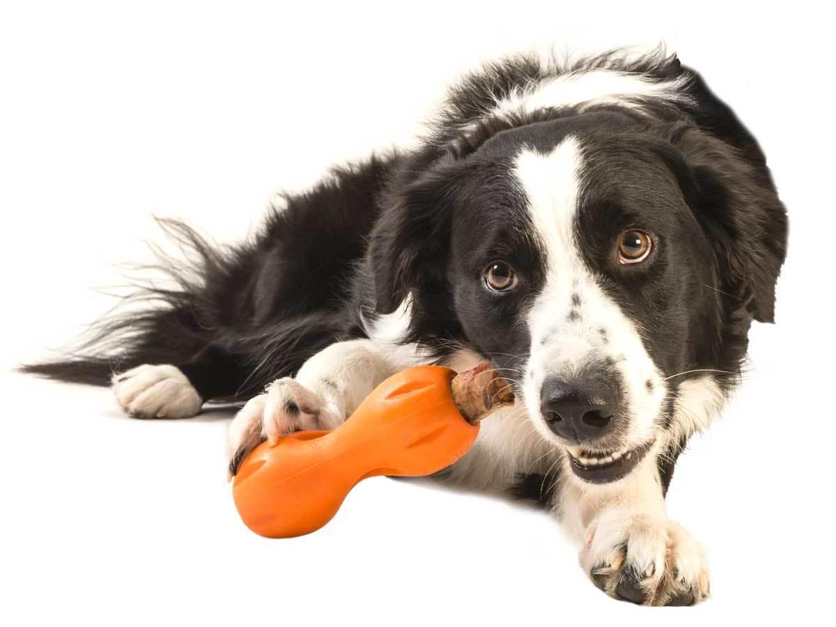 Dog With West Paw Qwizl