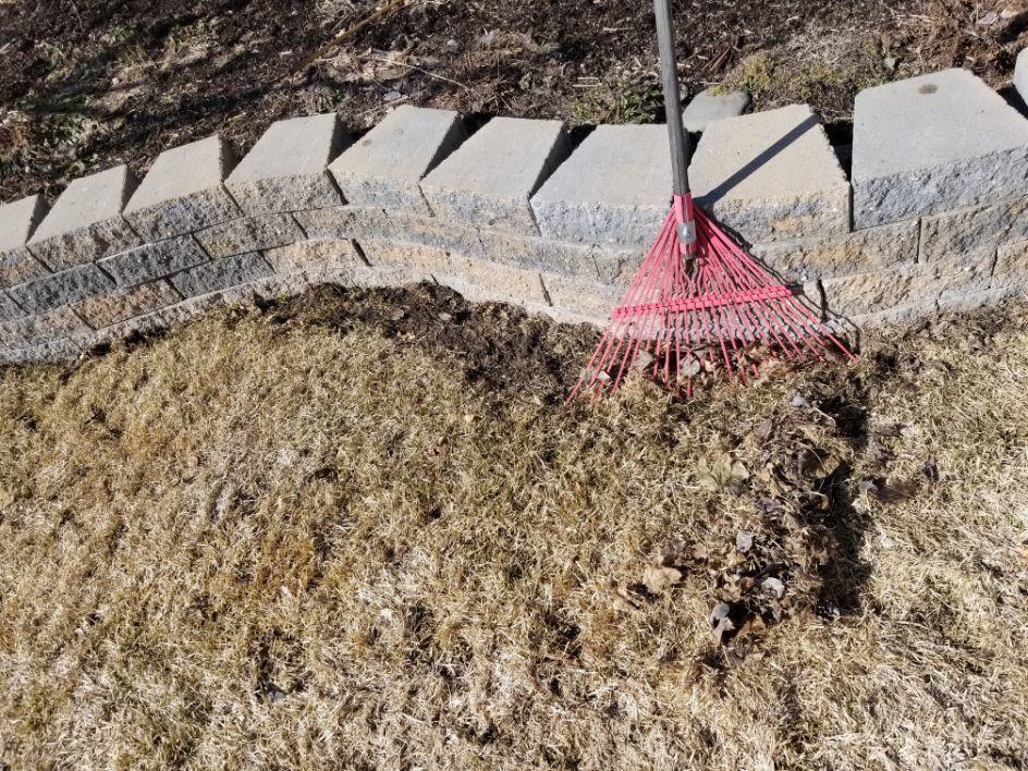 vole lawn damage tips - Bozeman, Montana