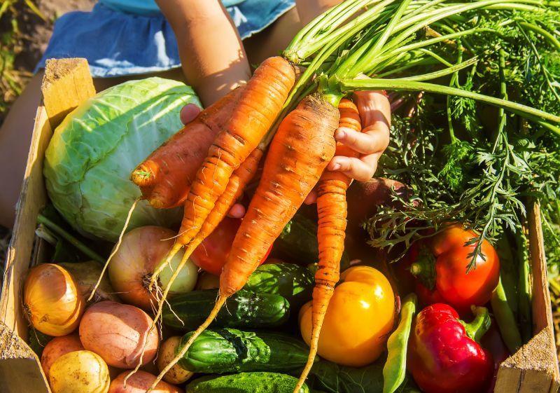 Fresh Produce in your backyard garden at Owenhouse ACE Hardware