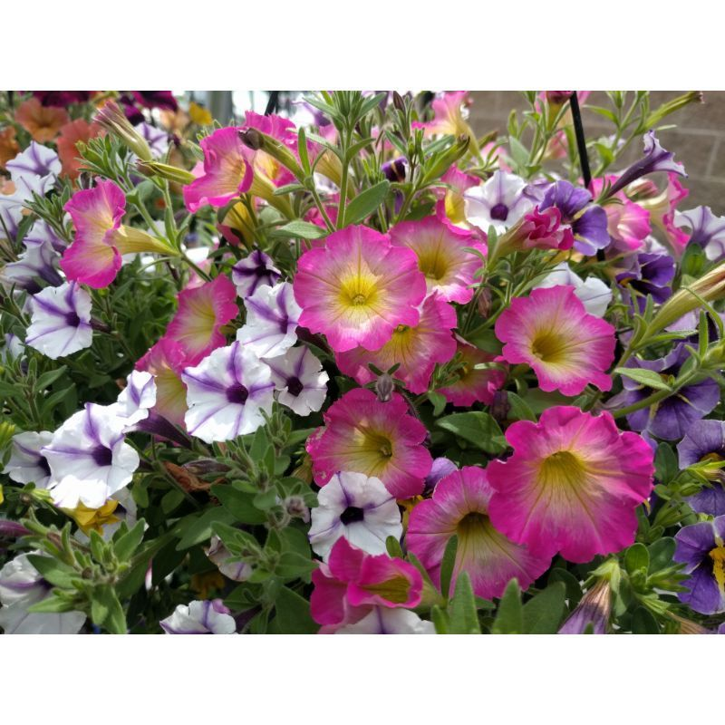 Gardening-Flowers-on-Owenhouse-Ace-Hardware-Bozeman