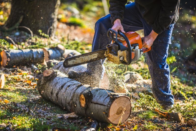 man chopping a tree with a STIHL chainsaw