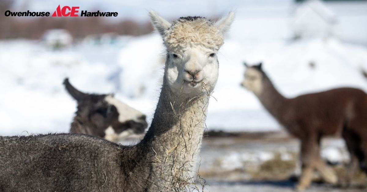 Alpaca Wool Clothing - Bozeman, Montana - Owenhouse ACE Hardware