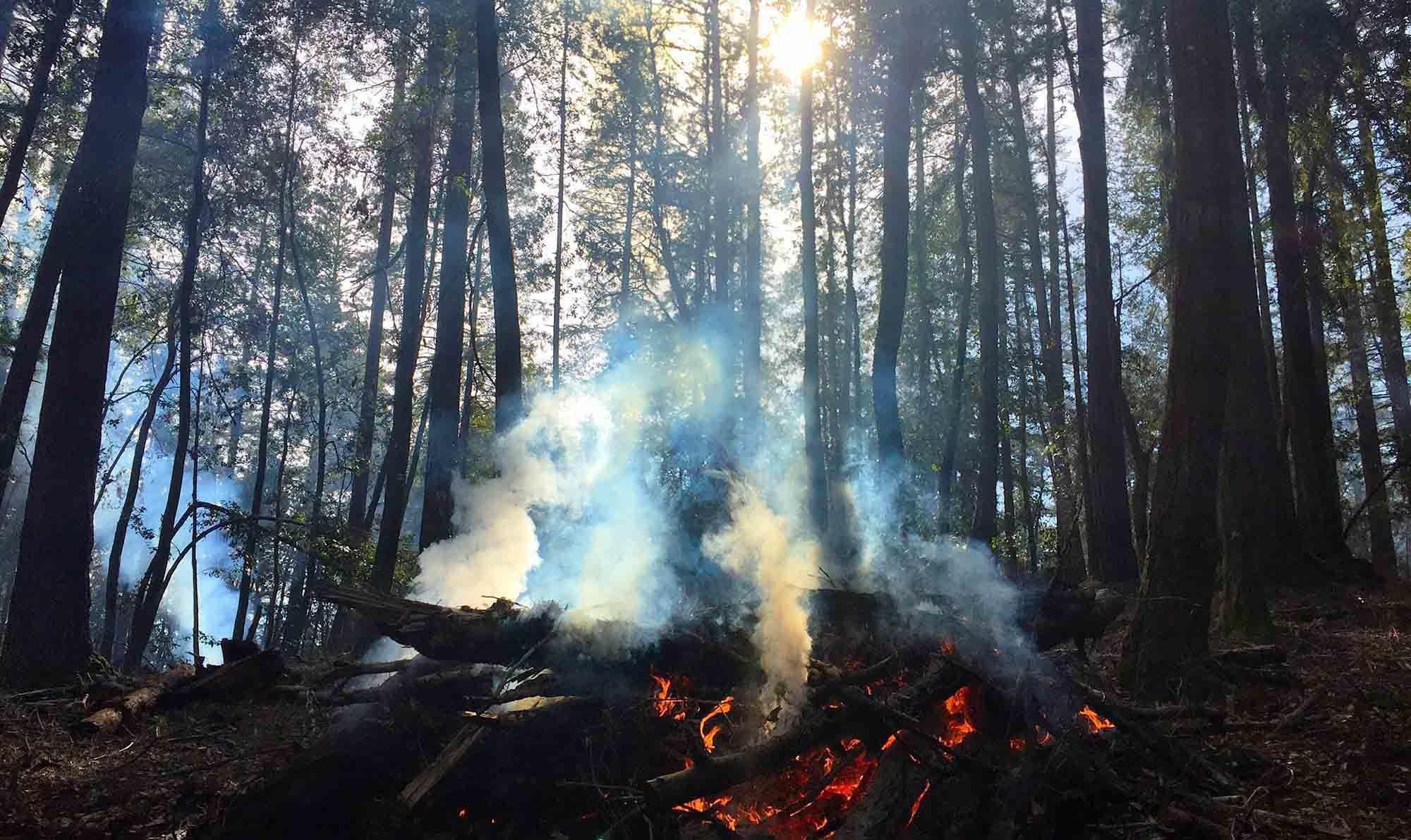 Bozemon Wild Fire
