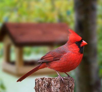 Bird and Pet Supplies thumbnail