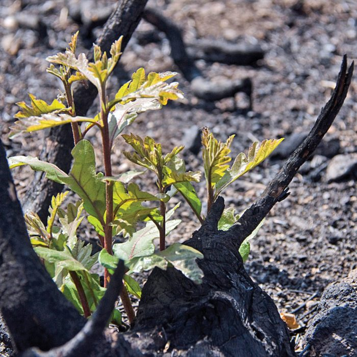 Life finds a way on scorched earth thumbnail