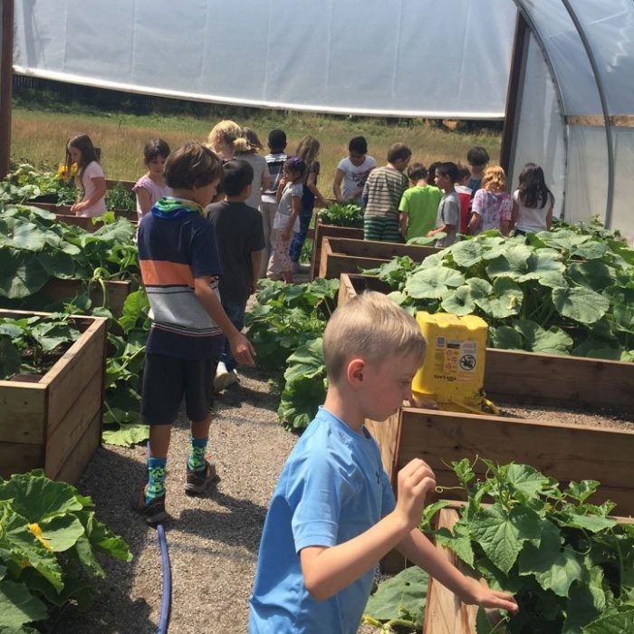 Roaring Fork Leadership and Ross Montessori partner to share harvest thumbnail