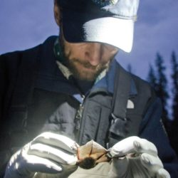 Bat biologists look to collaborate with climbers thumbnail