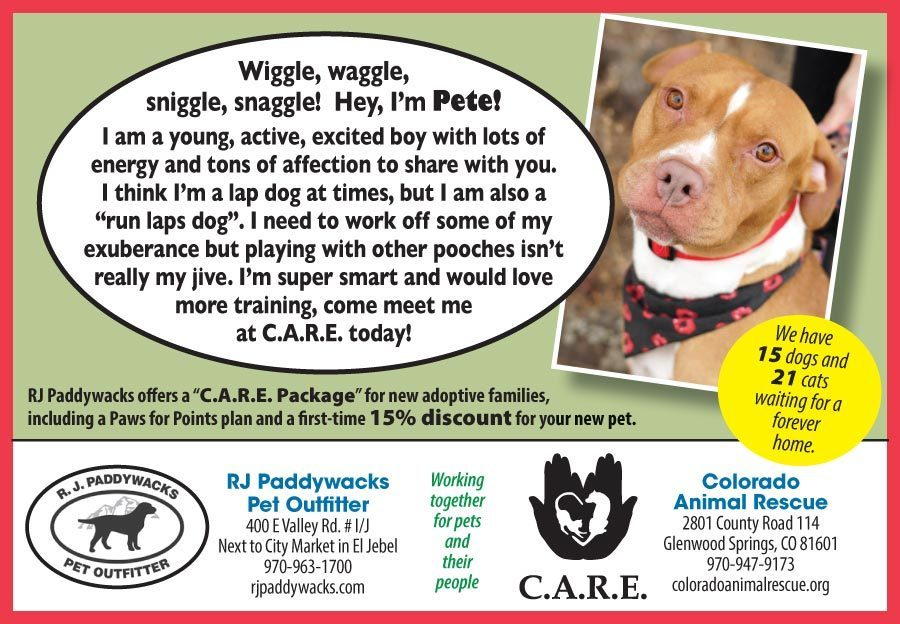 RJP-CARE_8th_PetAdoption_Pete_120618 thumbnail
