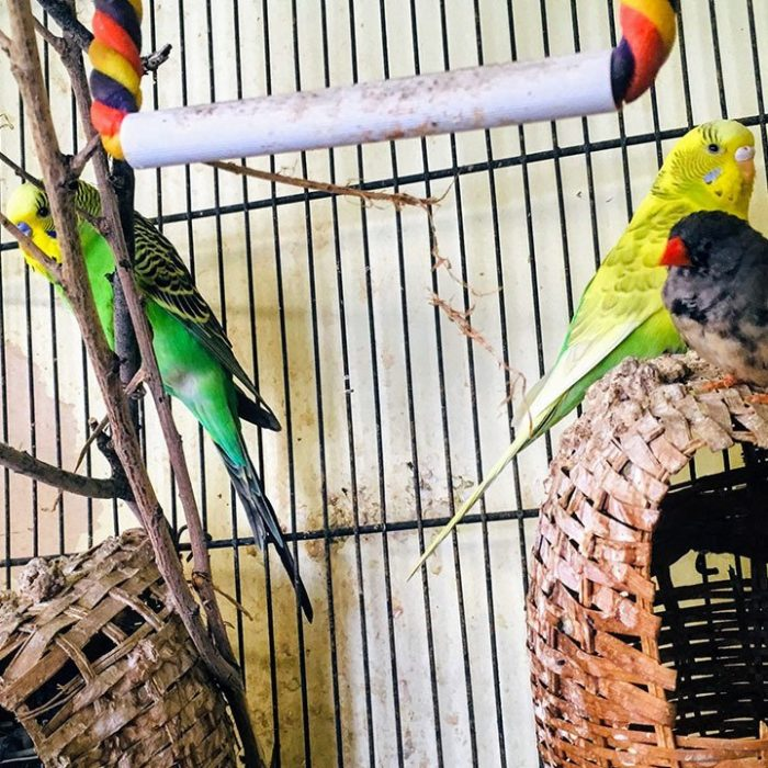 Real birds found, sculptural birds lost in Carbondale thumbnail