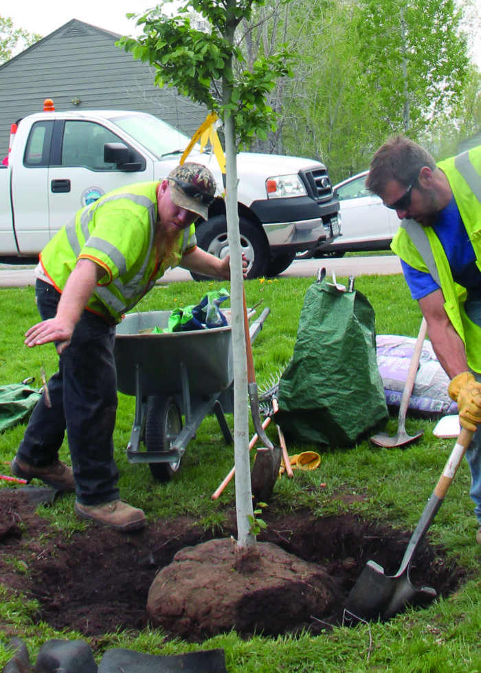 Fund, board and arborist prove Town can see urban forest for the trees thumbnail