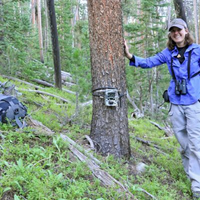 Investigating wildlife impacts of bark beetle outbreaks thumbnail
