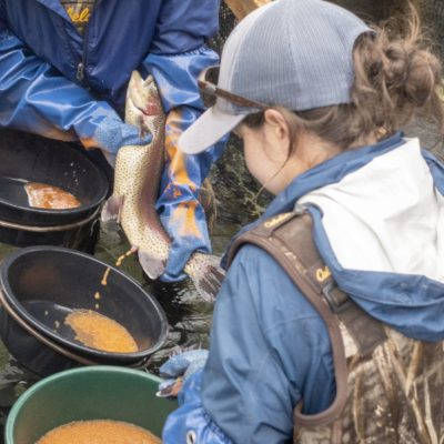Crystal River Hatchery stocked with educational opportunities thumbnail