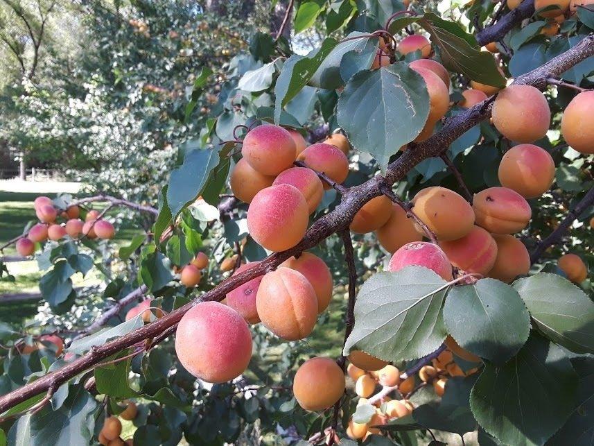 Virtual roundtable discusses a tumultuous season for agriculture thumbnail