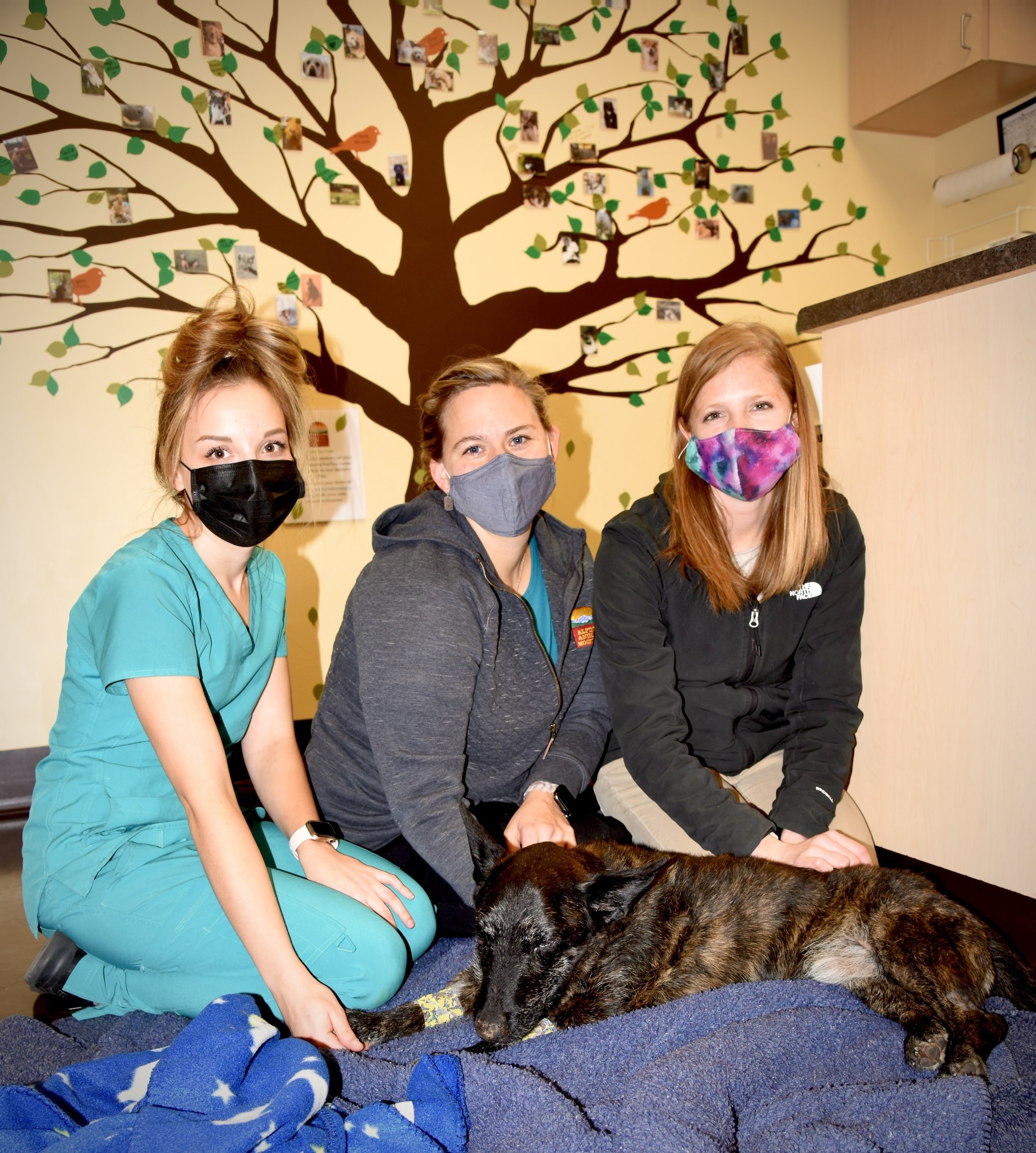 Alpine Animal Hospital staff: Rachelle Giulio, Dr. Melissa Gifleson, and vet tech Amy Burmaster.
