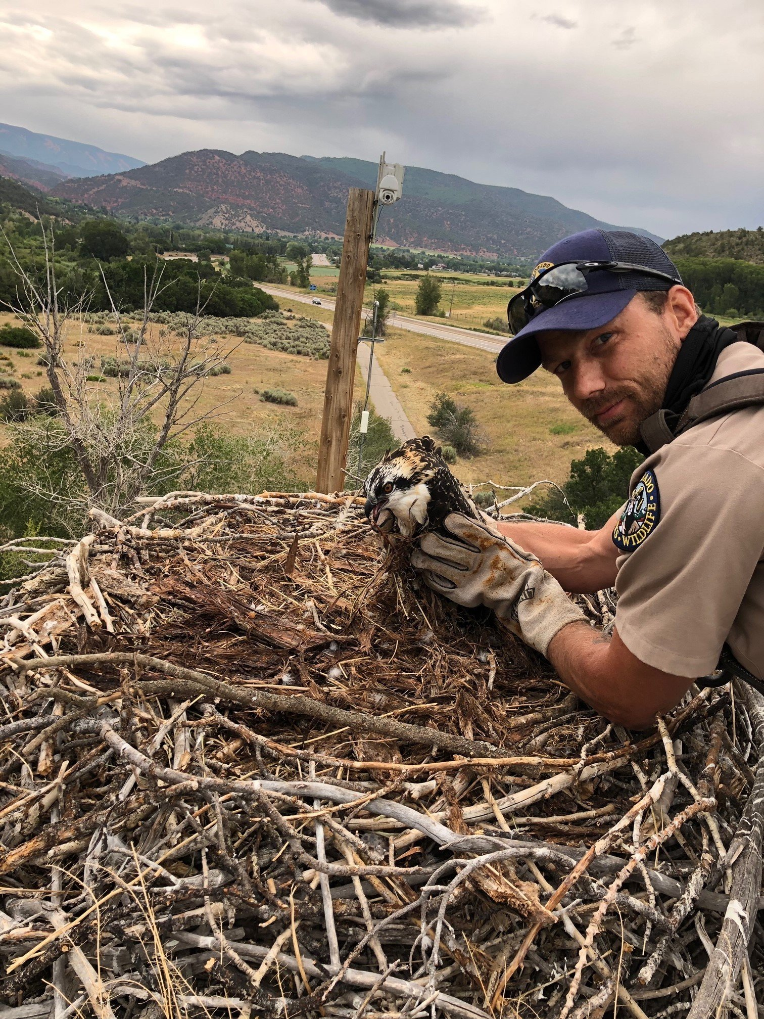 DWM Kurtis Tesch helps an osprey tangled in some fishing line. Courtesy image.