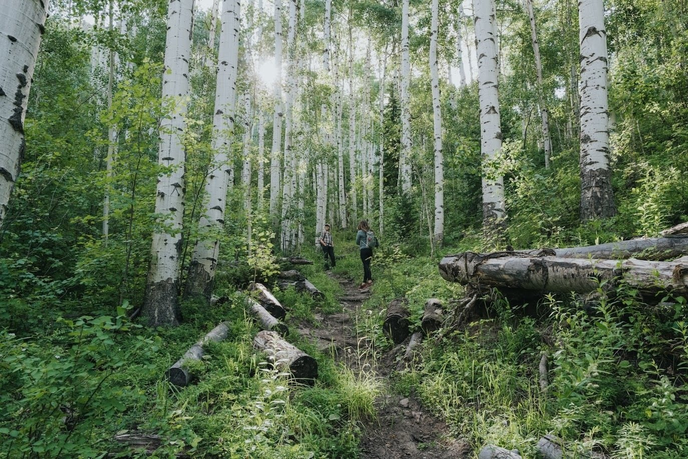 WRNF explores aspen forest management thumbnail