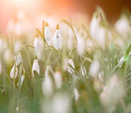Spring Equinox Community Celebration thumbnail