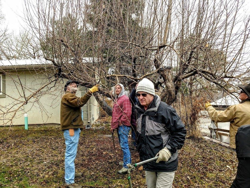 Tool Maintenance & Fruit Tree Pruning thumbnail