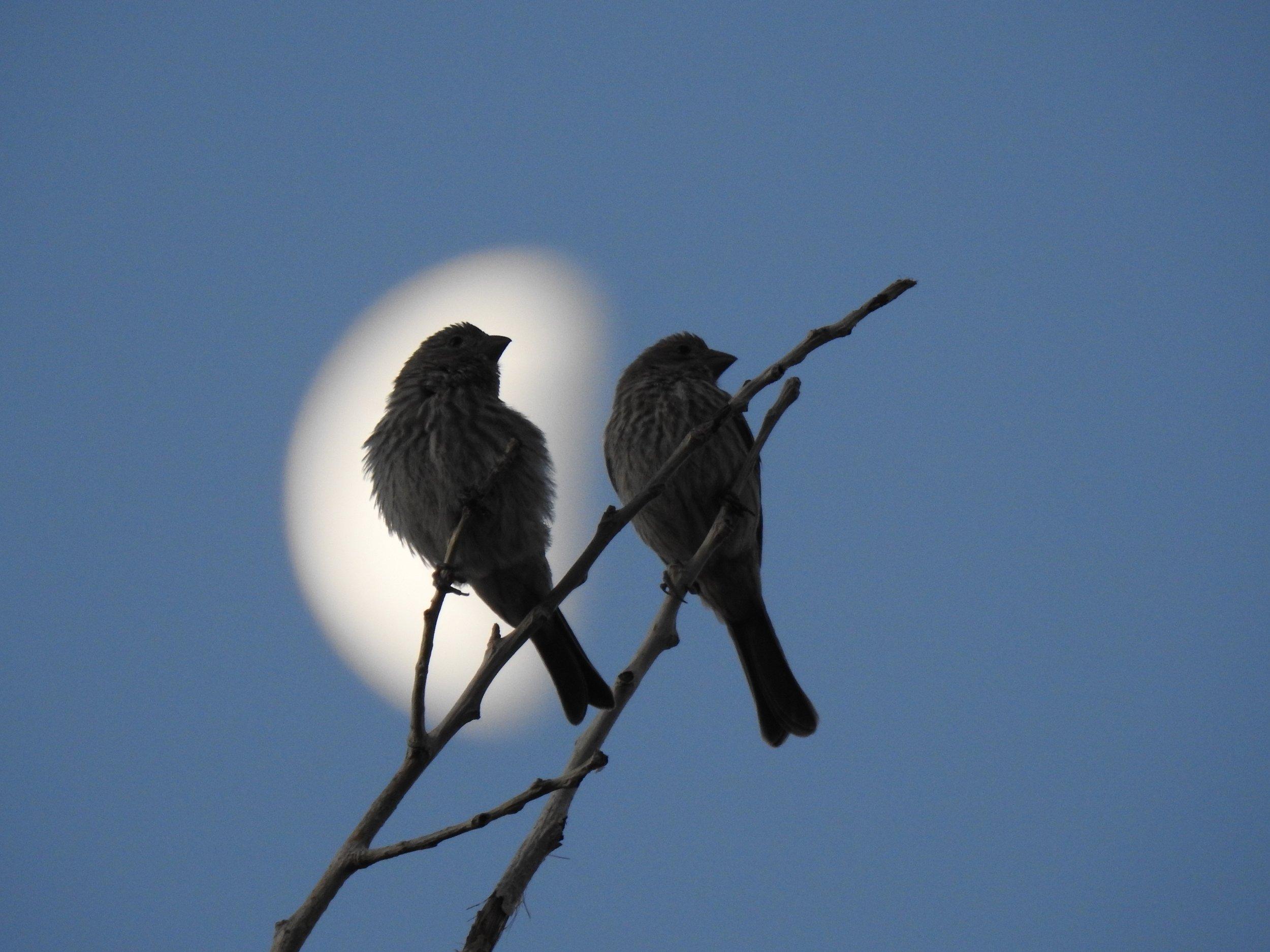 Honrando el cielo nocturno thumbnail