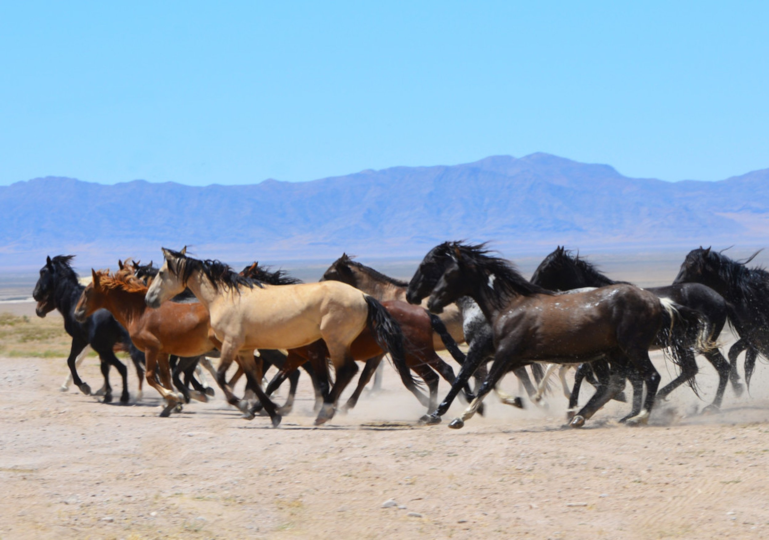 Opinion: Wild horses have chance at auction before slaughter thumbnail