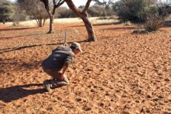 Tracking a warthog