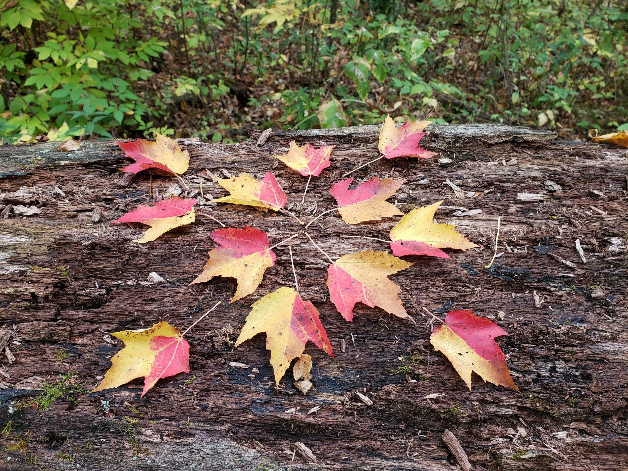 Grateful leaf art