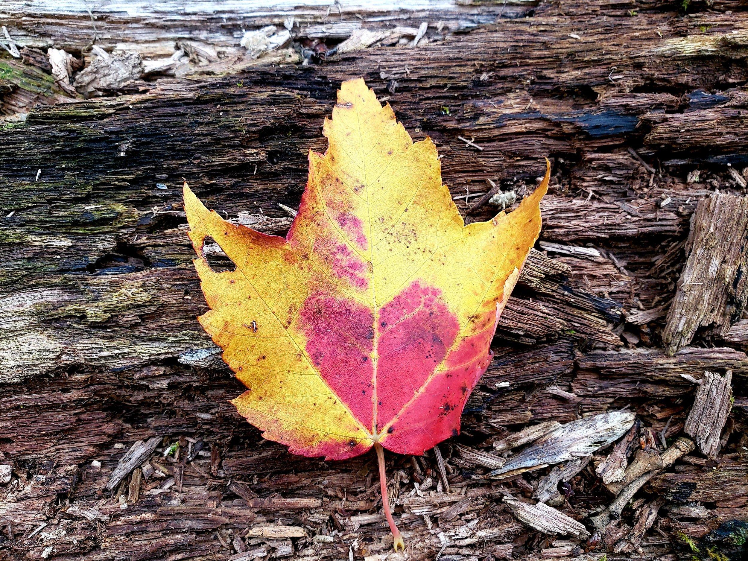 Grateful love leaf