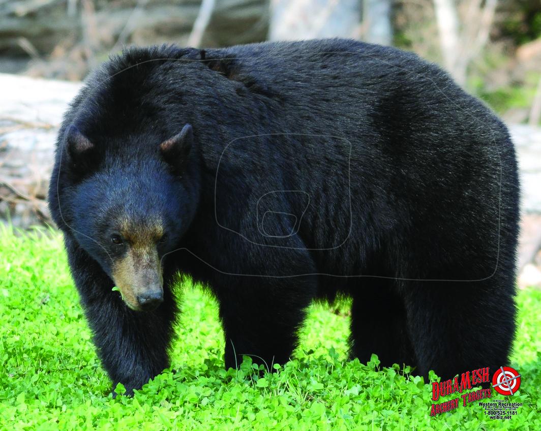 DM202 Bear #1 thumbnail