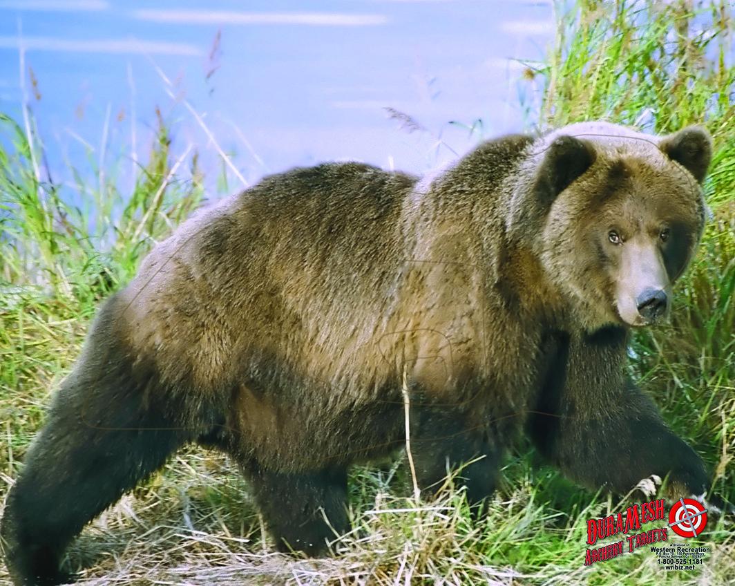 DM203 Bear #2 thumbnail
