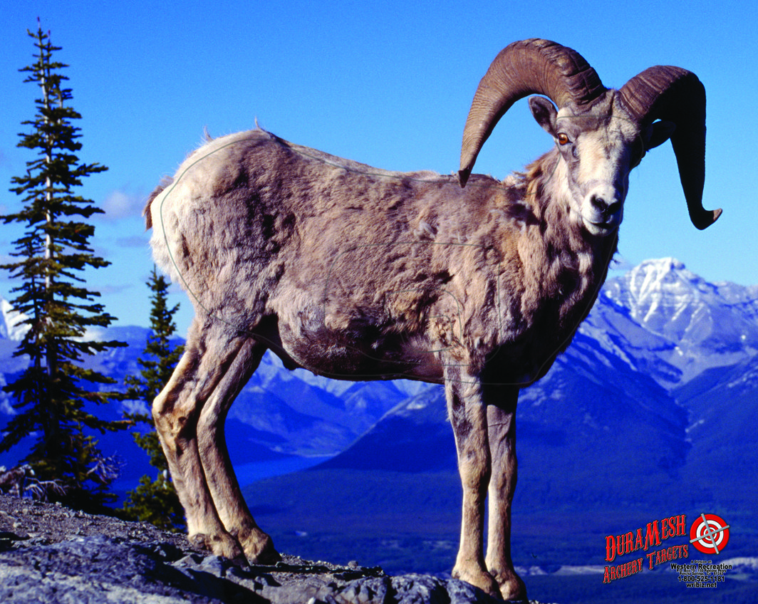 DM204 Big Horn Sheep thumbnail