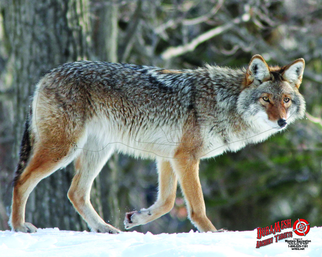 DM209 Coyote thumbnail