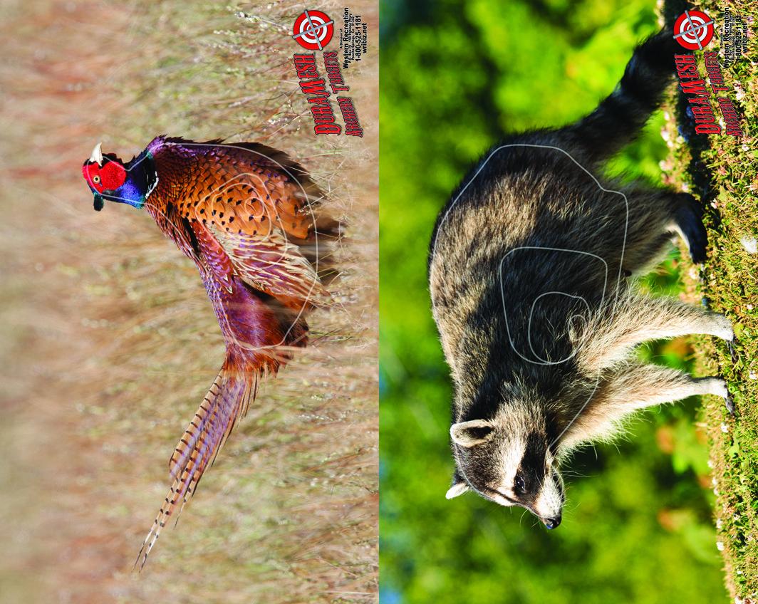 DM212 Pheasant Racoon thumbnail